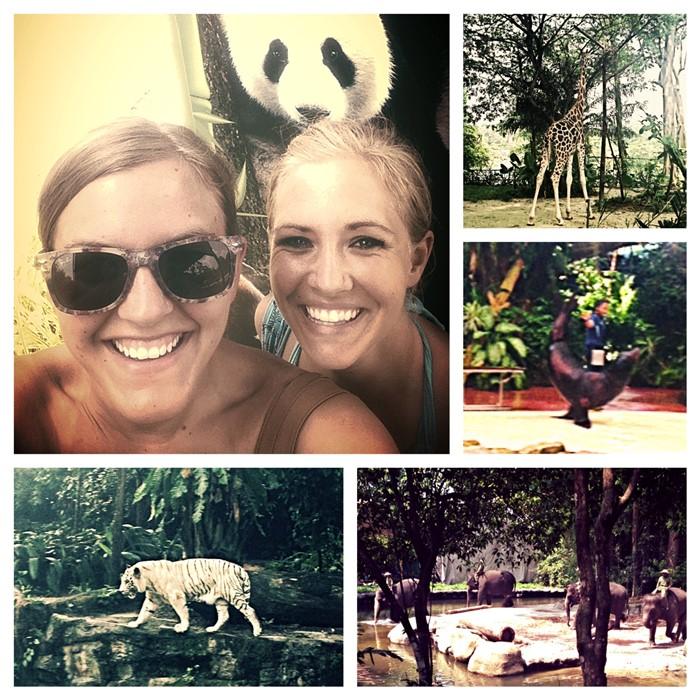 Day Trip to Singapore Zoo