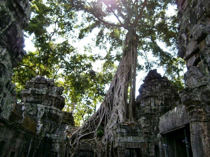 Angkor Wat Trees Ta Prohm Tomb Raider