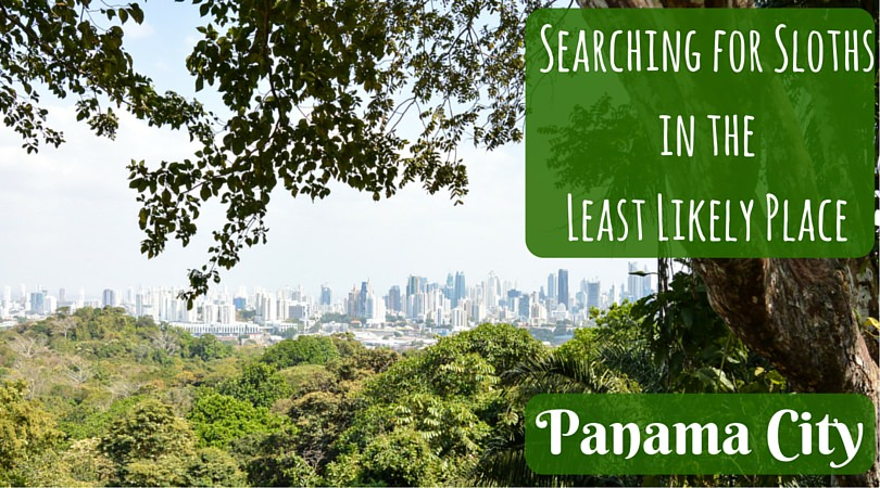 Searching for Sloths in the Least Likely Place: Panama City