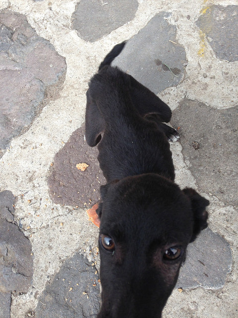 Starving Dog in Tzununa, Guatemala: Adopt a Street Dog Abroad