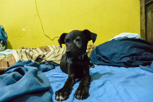 Adopt a Dog from Guatemala