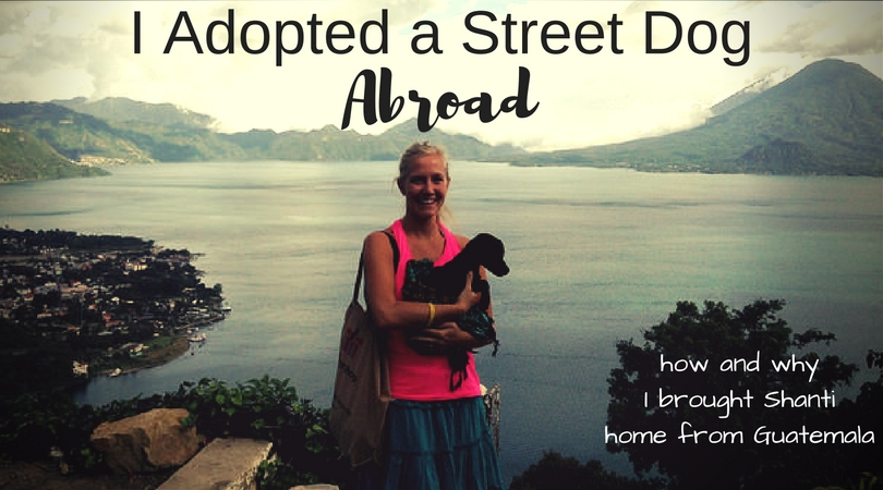 I'm Fostering a Rescued Street Dog from Guatemala
