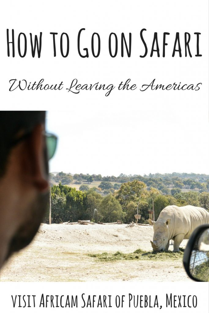 How to Safari Without Leaving America