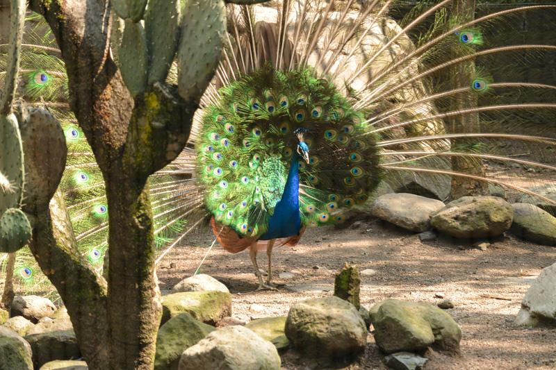 Mexico City Chapultepec Zoo