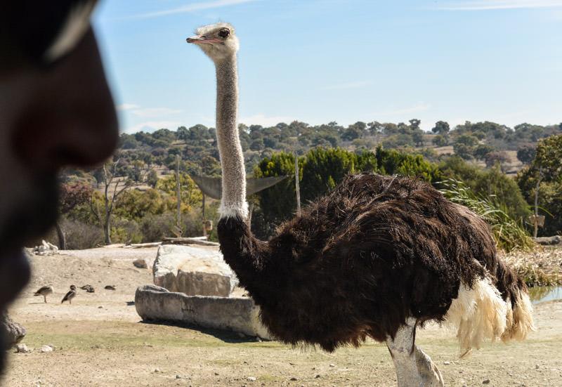 Africam Safari Puebla Mexico