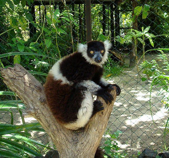 Madagascar Travel Dream List