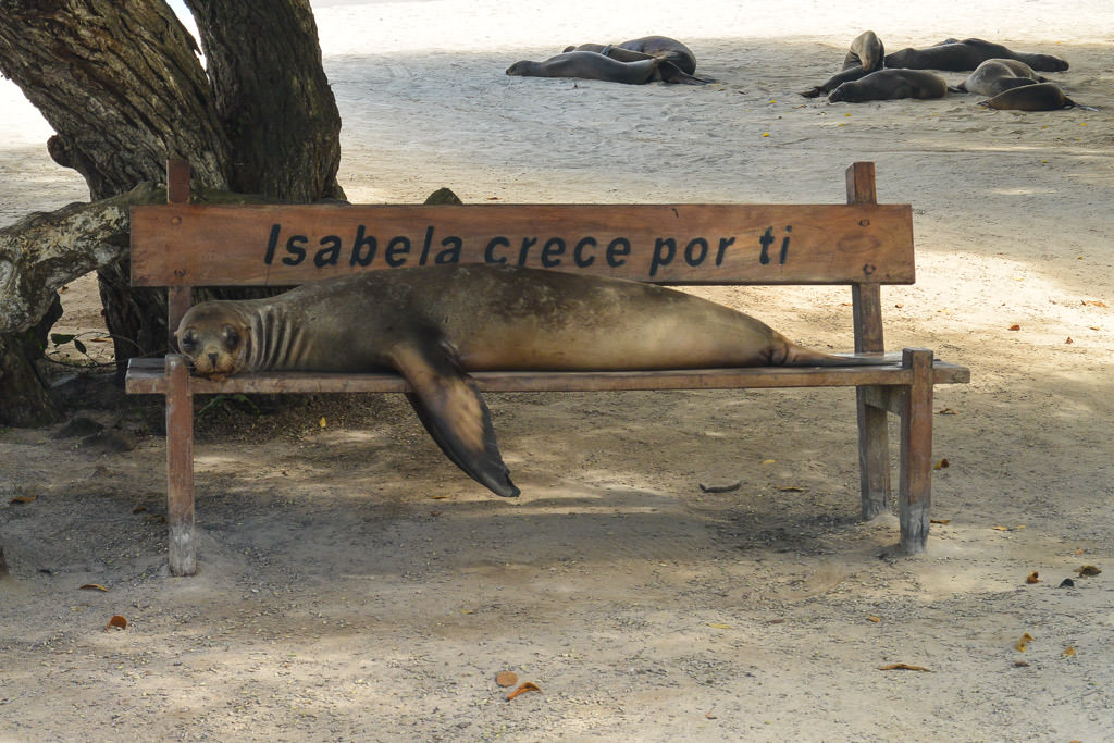Isabela Island of the Galapagos Islands