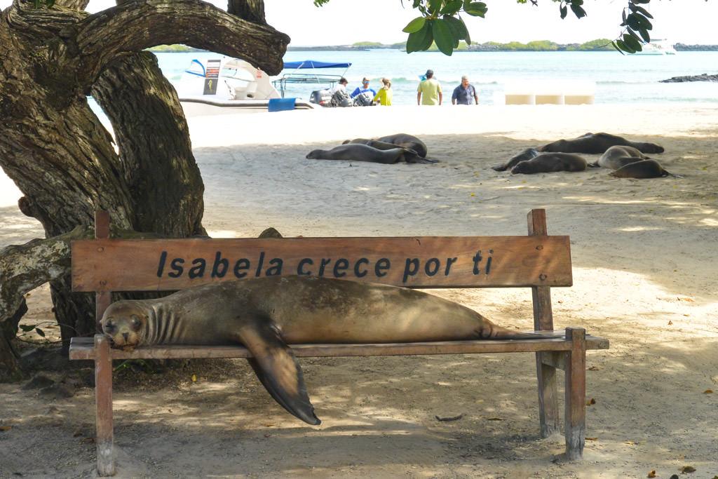 Isabela Sea Lion Galapagos Islands