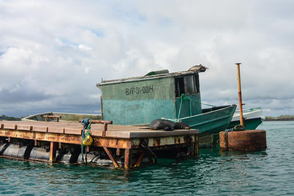 Isabela Island of the Galapagos Islands