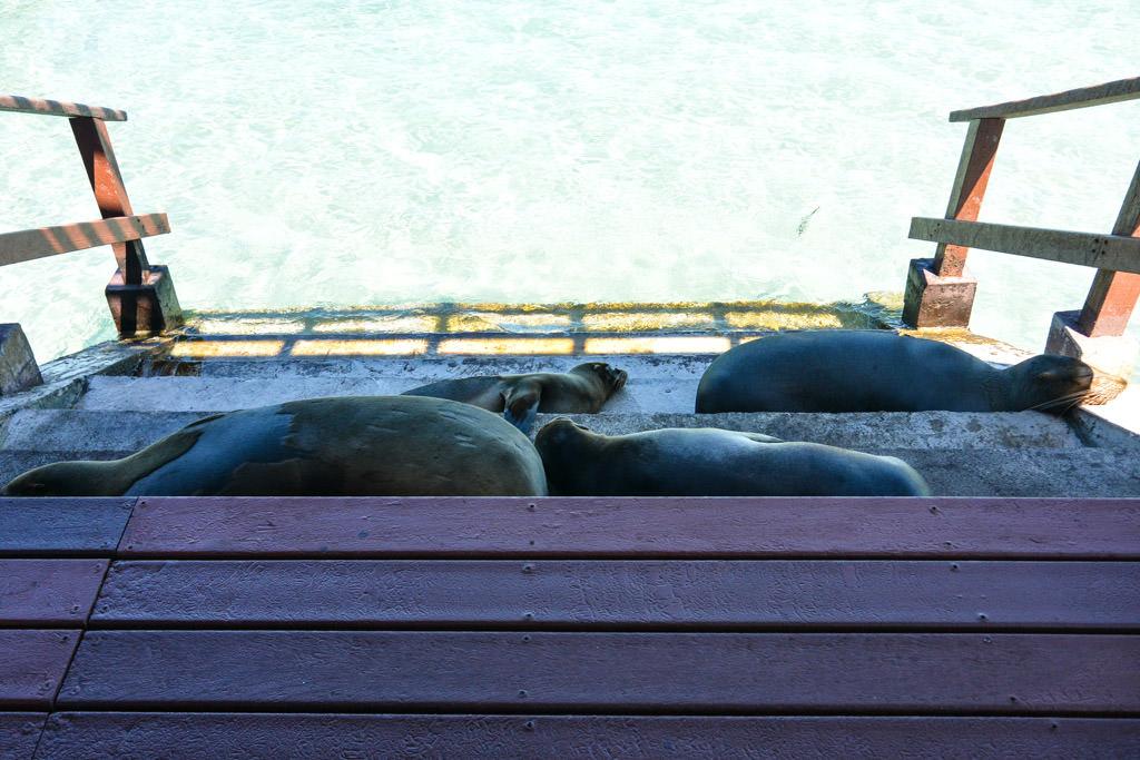 Isabela Island Sea Lions