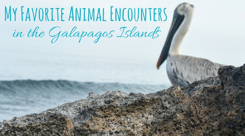 My 10 Favorite Animal Encounters in the Galapagos Islands