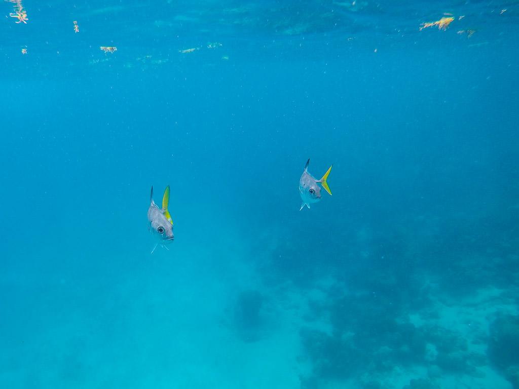 MesoAmerican Reef Snorkeling