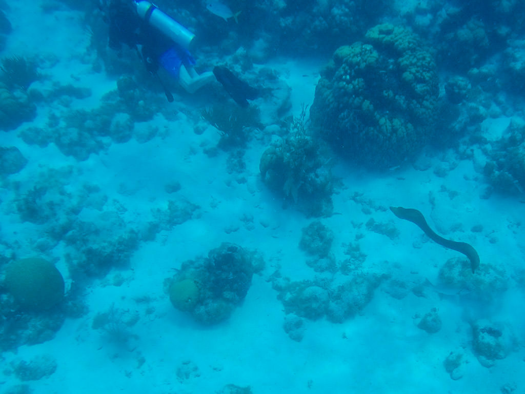 Snorkeling in Belize: Seeing a Moray Eel at Hol Chan