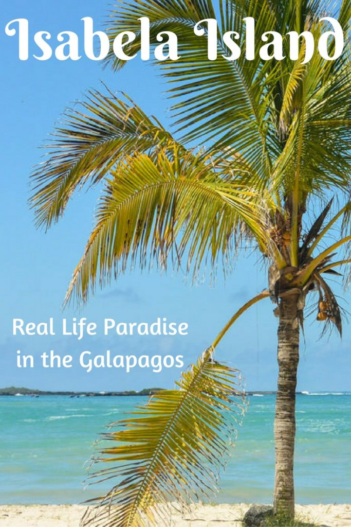 Isabela Island: Real Life Paradise in the Galapagos Islands