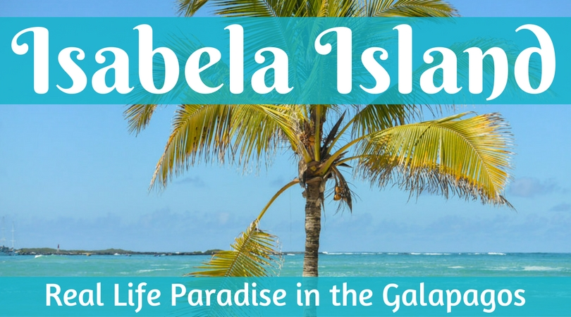 Isabela Island: Real Life Paradise in the Galapagos