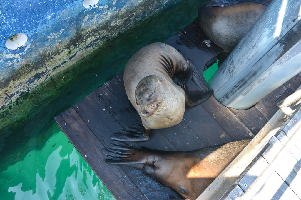 Sea Lions in San Cristobal, Galapagos
