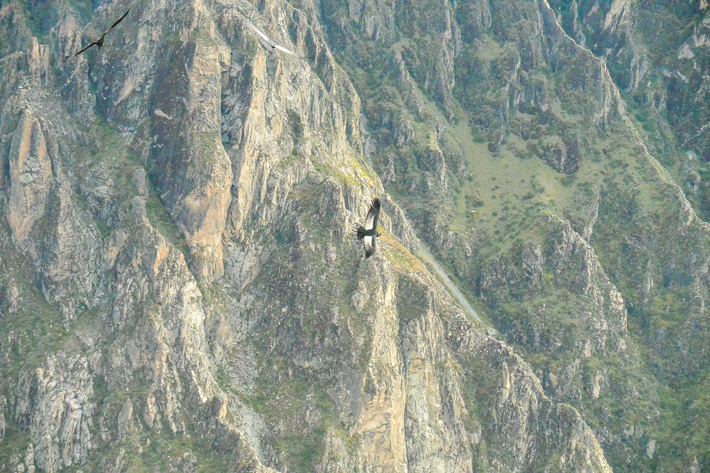 Searching for Condors in Colca Canyon