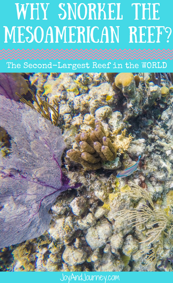 Snorkel the MesoAmerican Reef