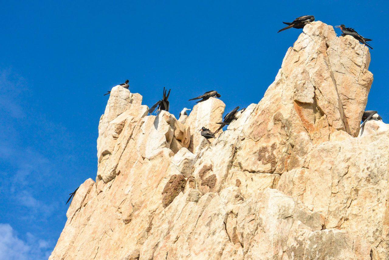 Birds near El Arco Cabo San Lucas