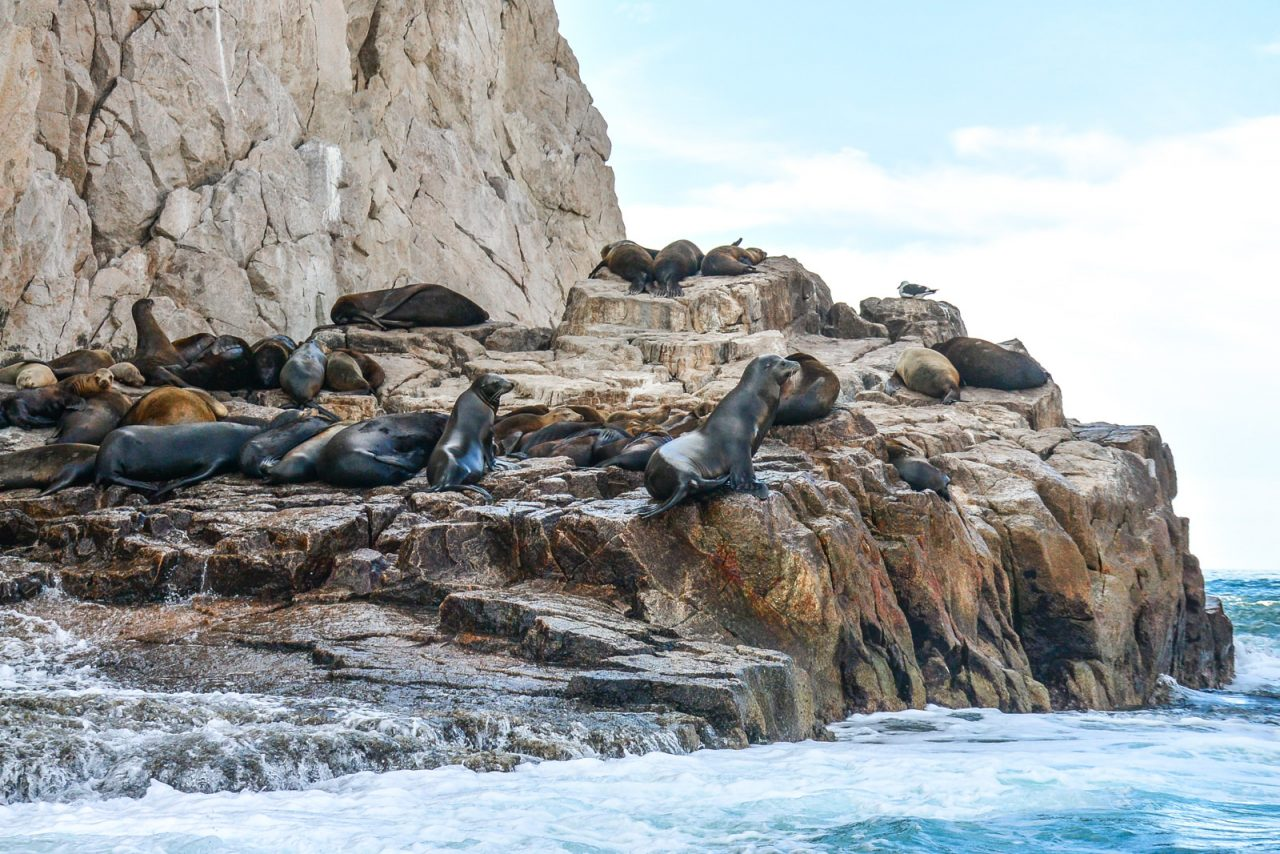 Sea Lions in Cabo San Lucas