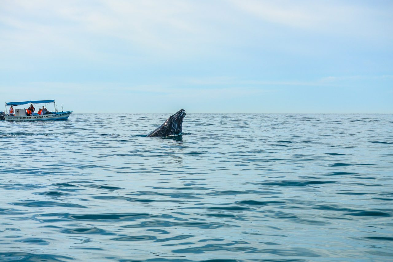 Couple Trip: Whale Watching in Cabo San Lucas