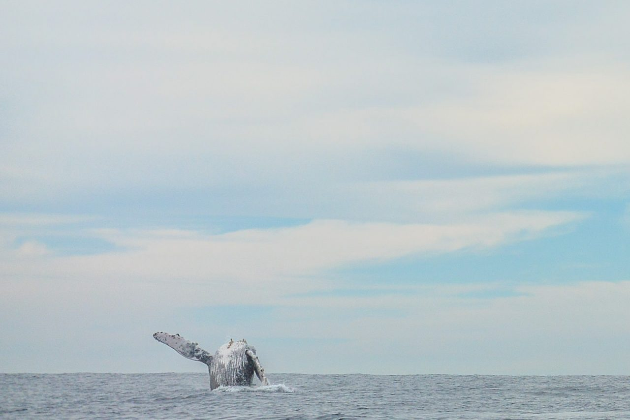 Watching whales in Cabo San Lucas