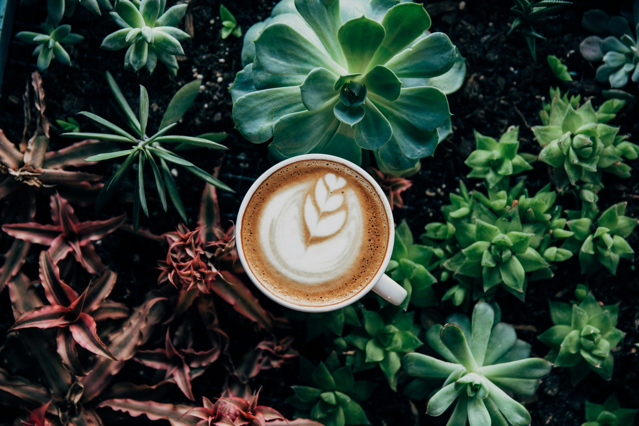 https://www.pexels.com/photo/beautiful-botanical-coffee-decoration-374757/