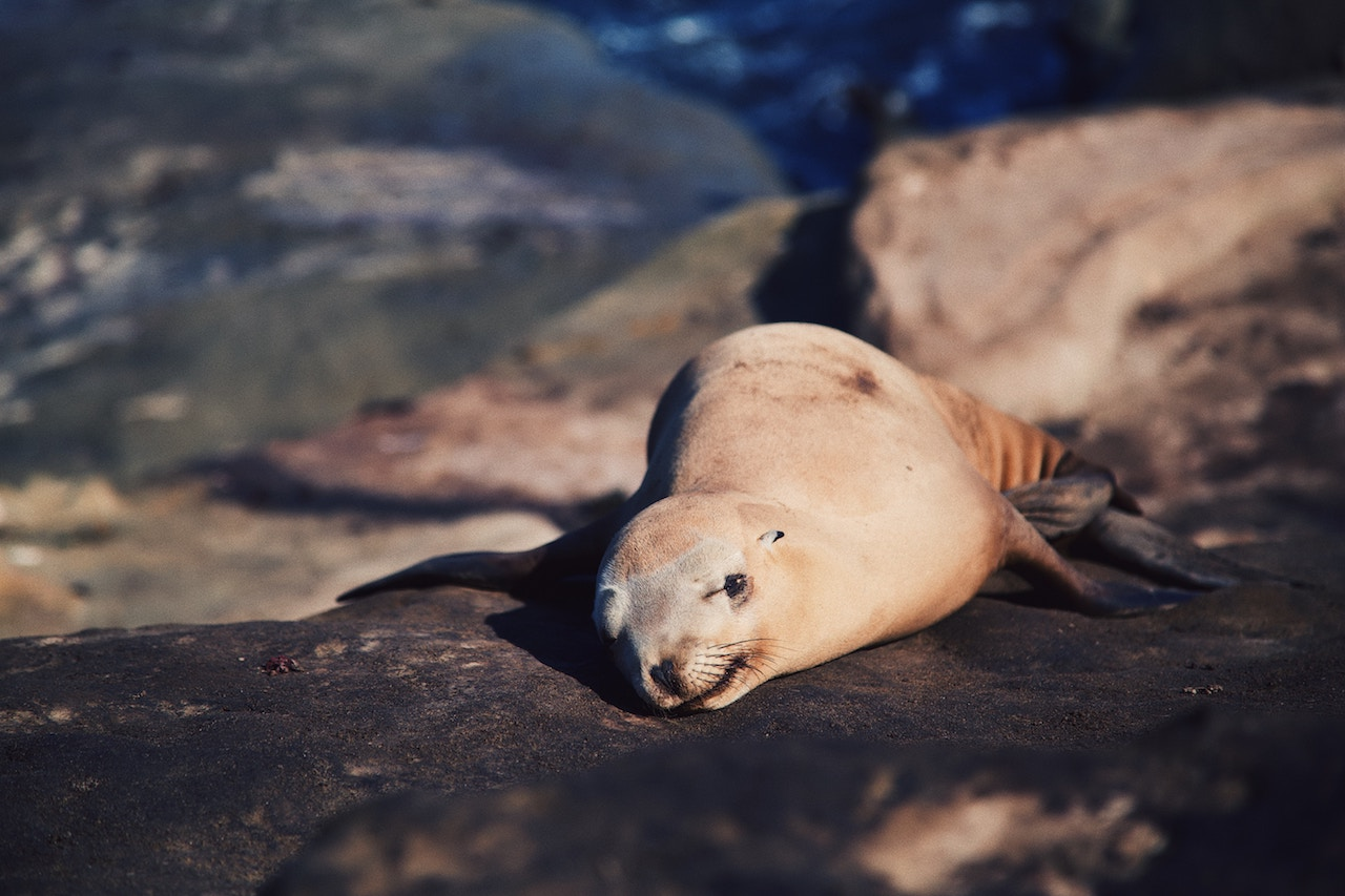 Sea lion in san diego