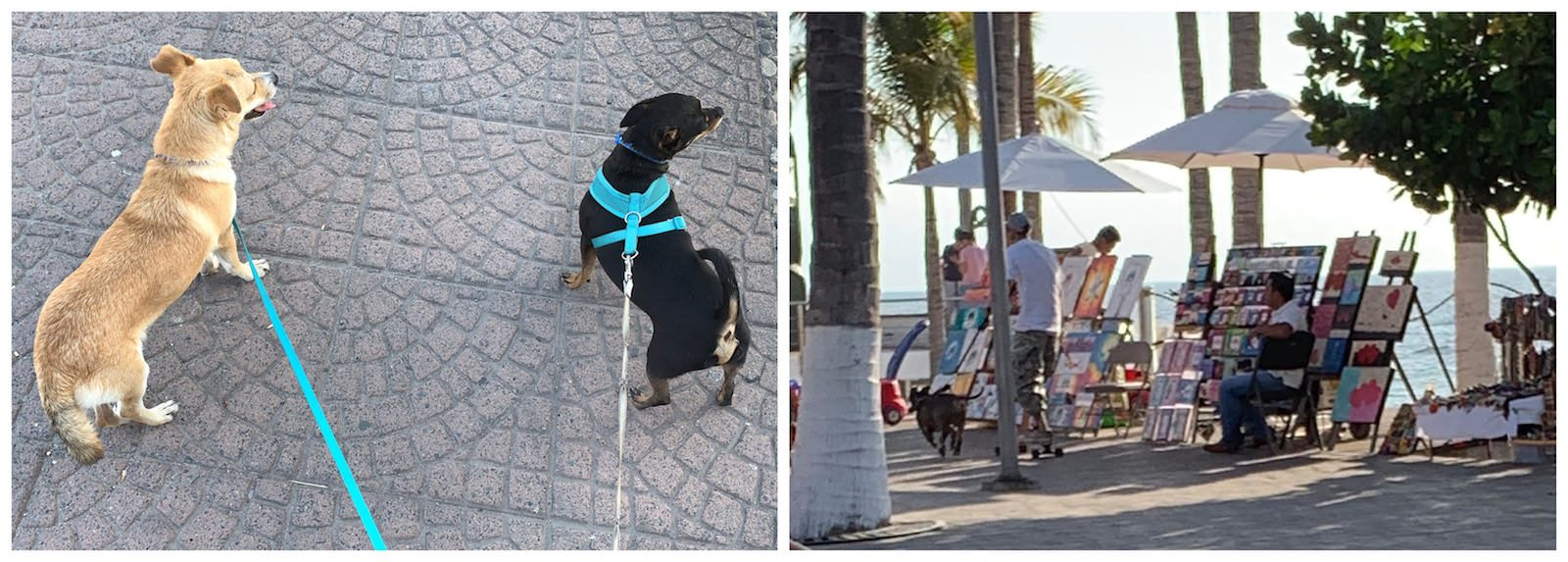 Dogs on Malecon