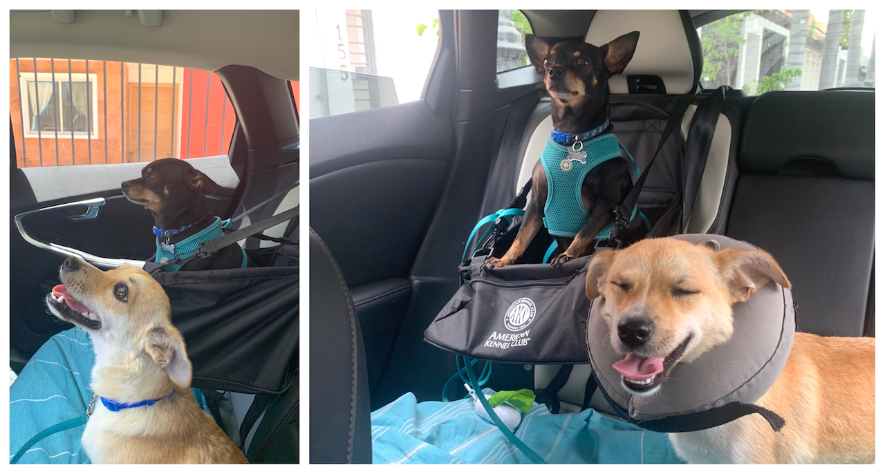 Booster seat for dogs